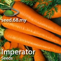 Carrot - Imperator