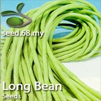 Long Bean / Kacang Panjang